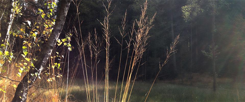 pflanzenreich-2.jpg